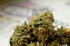 Marihuana - zdjęcie partnera