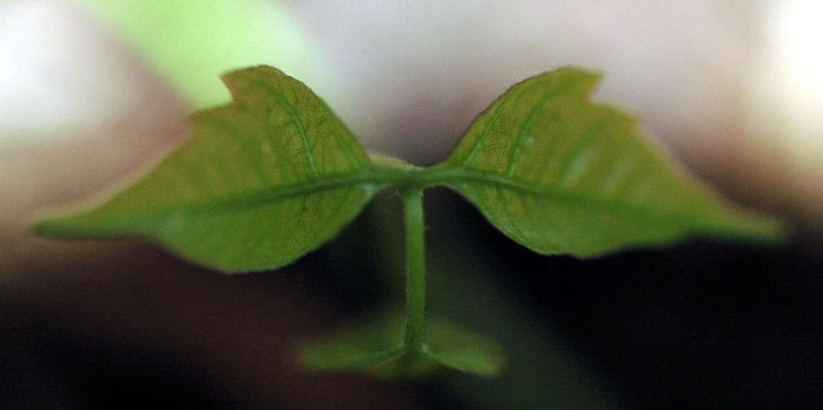 Makro liści - zdjęcie partnera