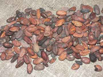 Cocoa beans / http://en.wikipedia.org/wiki/Cocoa_bean