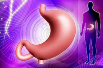 """Human Stomach"" by dream designs /www.freedigitalphotos.net"