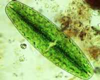 algae-ed01.jpg