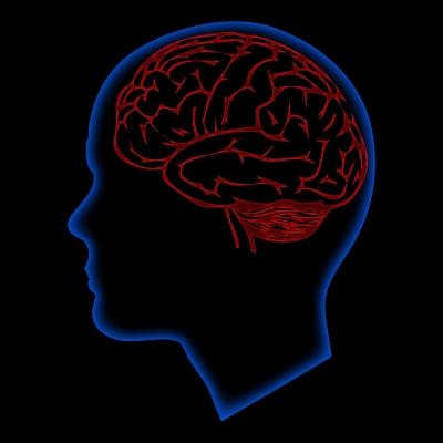 human brain, digitalart / www.freedigitalpfotos.net