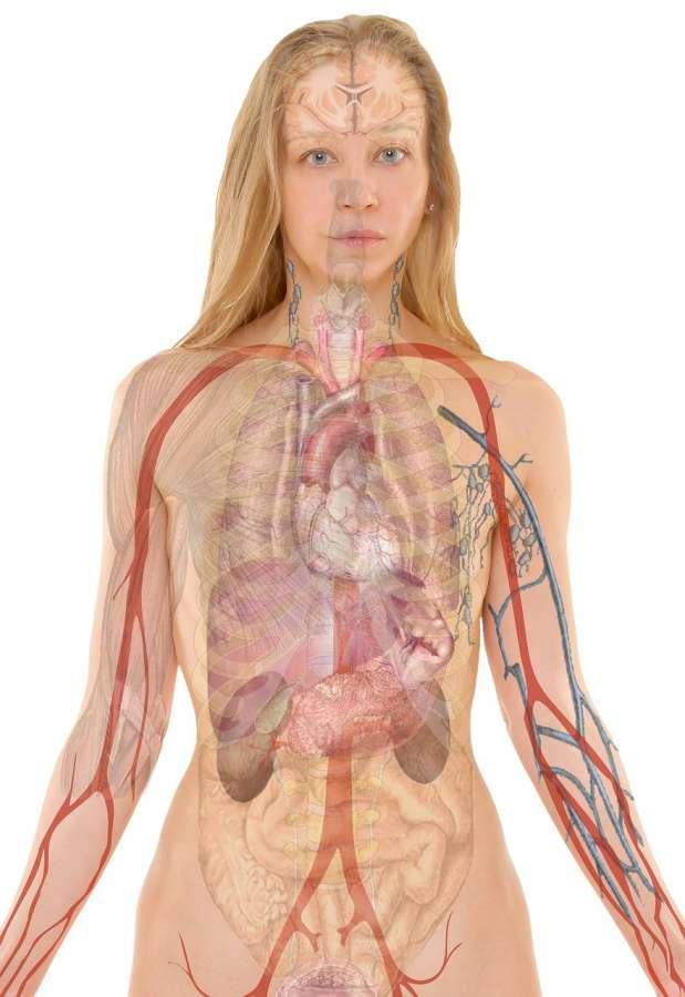 Płuca - zdjęcie partnera