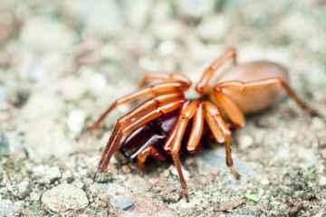 strach przed pająkami, www.pexels.com