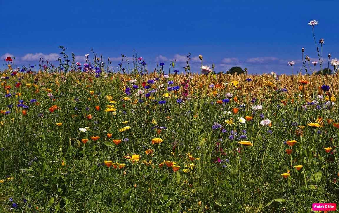 Wiosna - krajobraz - zdjęcie partnera
