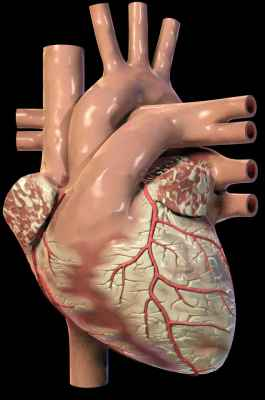 Tatuaż Do Badania Serca Dobry Lekarz