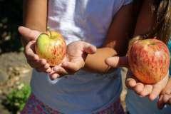 Jablka - zdjęcie partnera