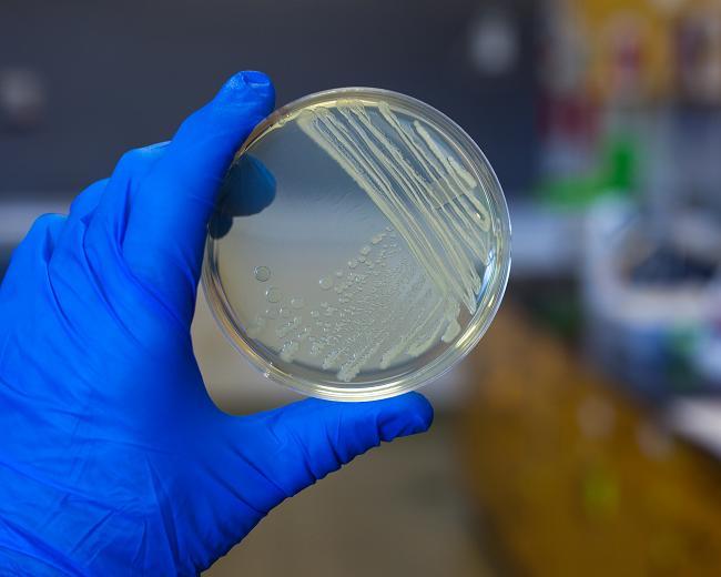 Bakterie 2 - freerangestock.com