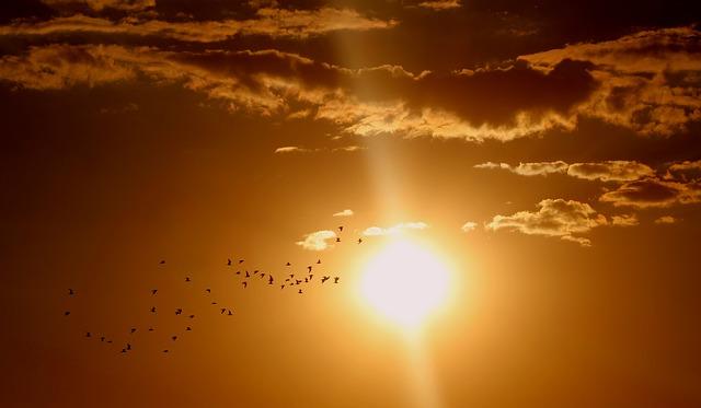 Zachód słońca - zdjęcie partnera