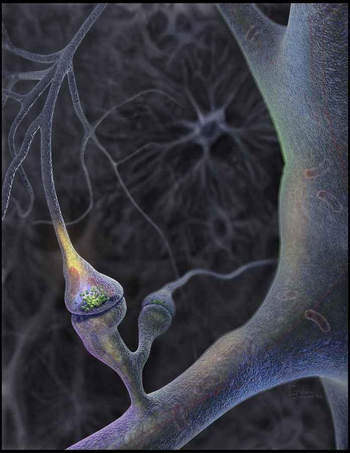 synapsa.jpg